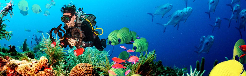 Hikkaduwa - Under Water Coral