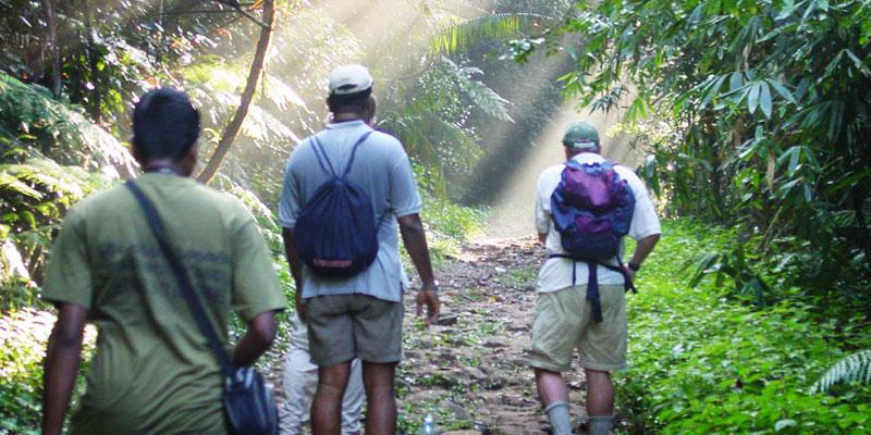sinharaja_rainforest_tour