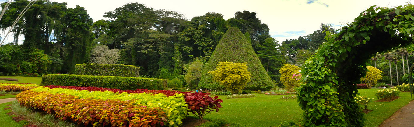 Royal Botanical Gardens - Peradeniya